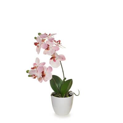 fi7375-pink-orchid-in-pot-36cm