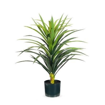 fi7606gr-yucca-plant-green-red-76cm