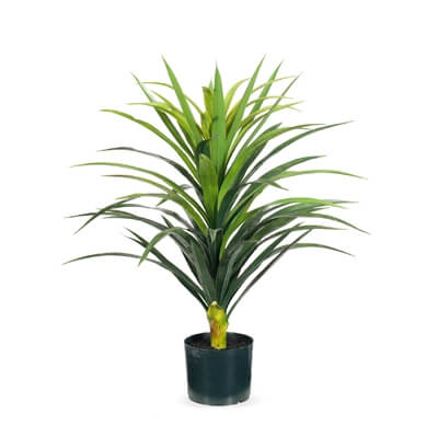 fi7606gr-yucca-plant-green-red-76cm