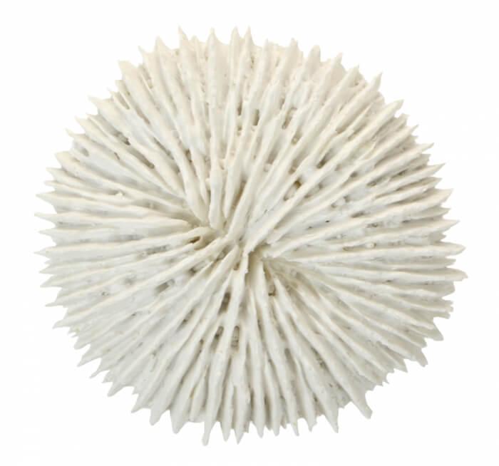 od1301-white-poly-fungia-coral